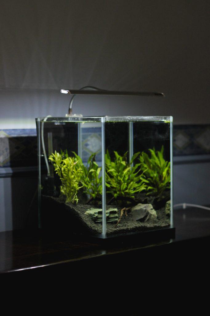 Aquarium outer acrylic painting
