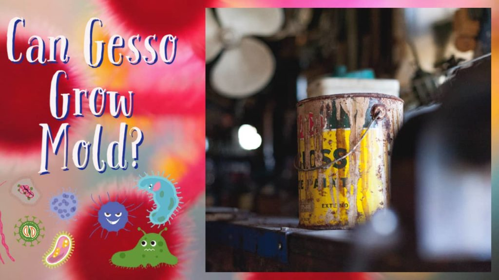 can gesso grow mold